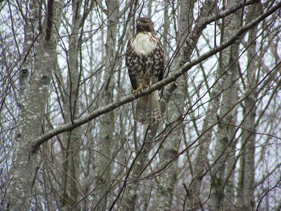 Winter Photograph - The Sentinel by Laurie Kidd