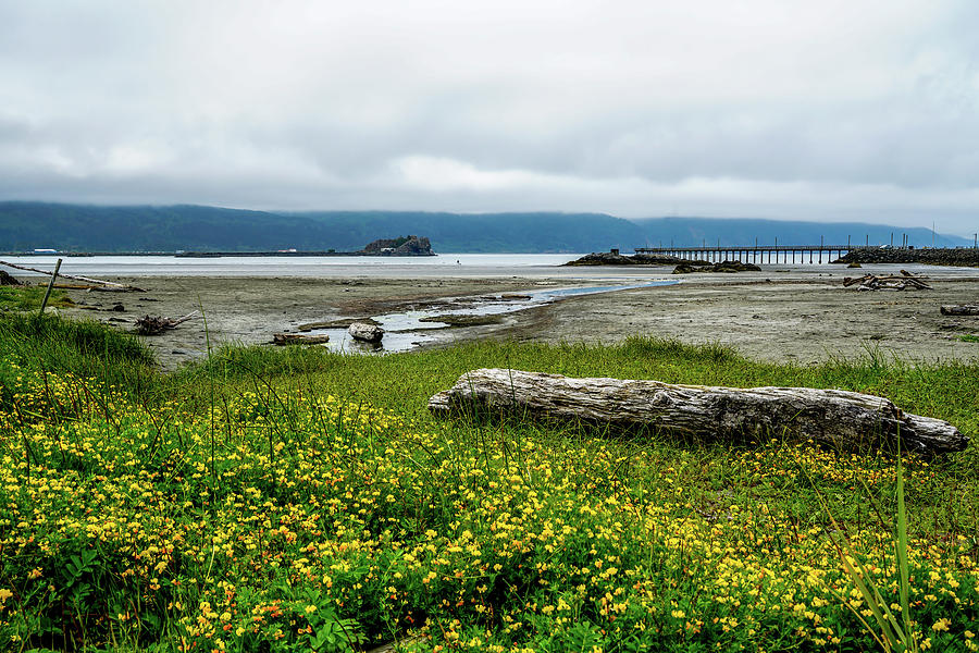 Tide Photograph - The Shoreline by Ric Schafer
