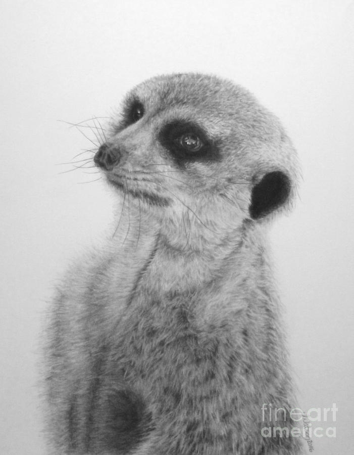 Meerkat Painting - The Silent Sentry by Jennifer Watson