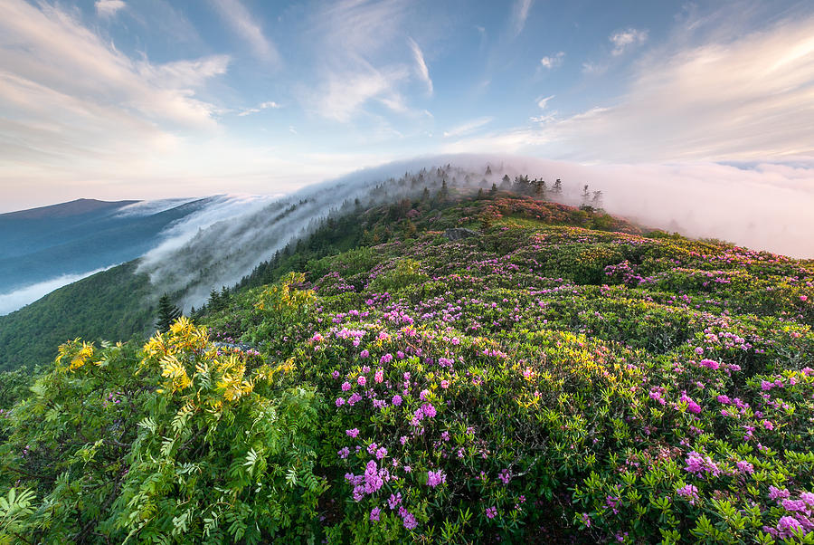 Rhododendron Photograph - The Silky Embrace Of The Roan Highlands by Mark VanDyke