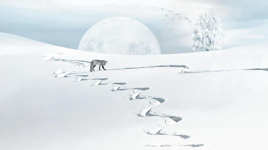 Fox Photograph - The Silver Fox by Andrea Kollo