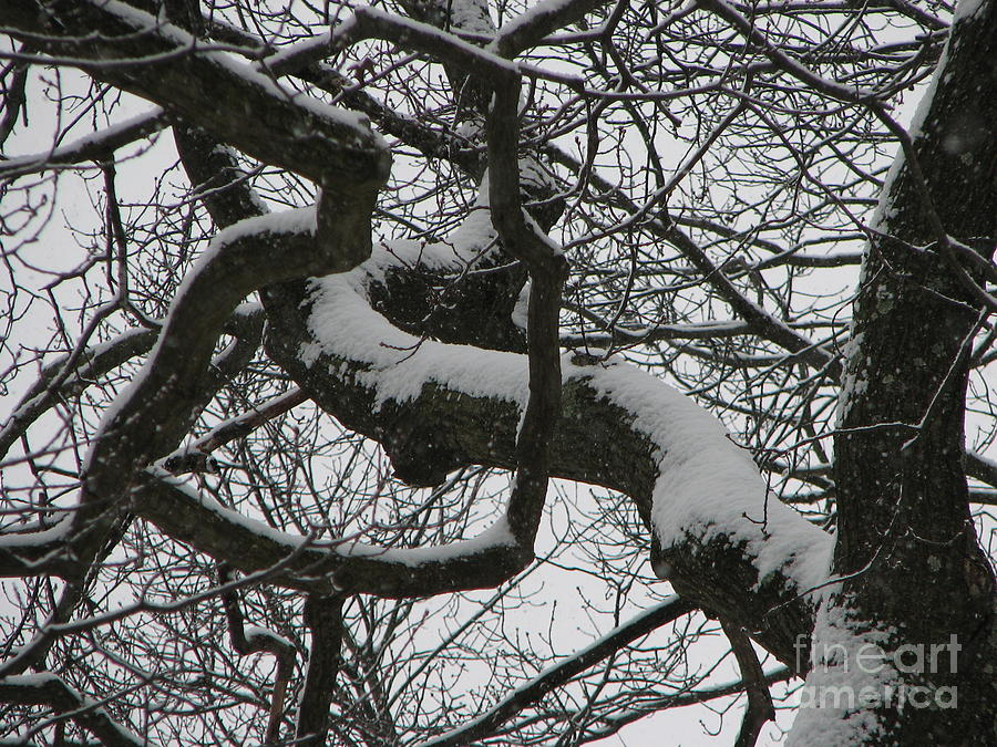 Branches Photograph - The Skyward Pathway In Snow by Roxy Riou