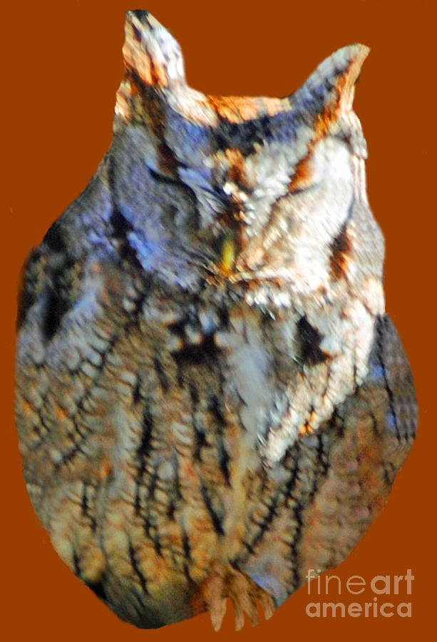 Owl Photograph - The Sleeping Owl by Jost Houk