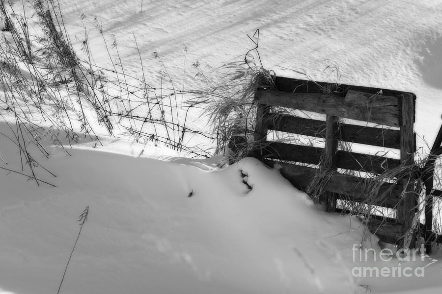 Snow Photograph - The Snow Gate  by Cathy Beharriell