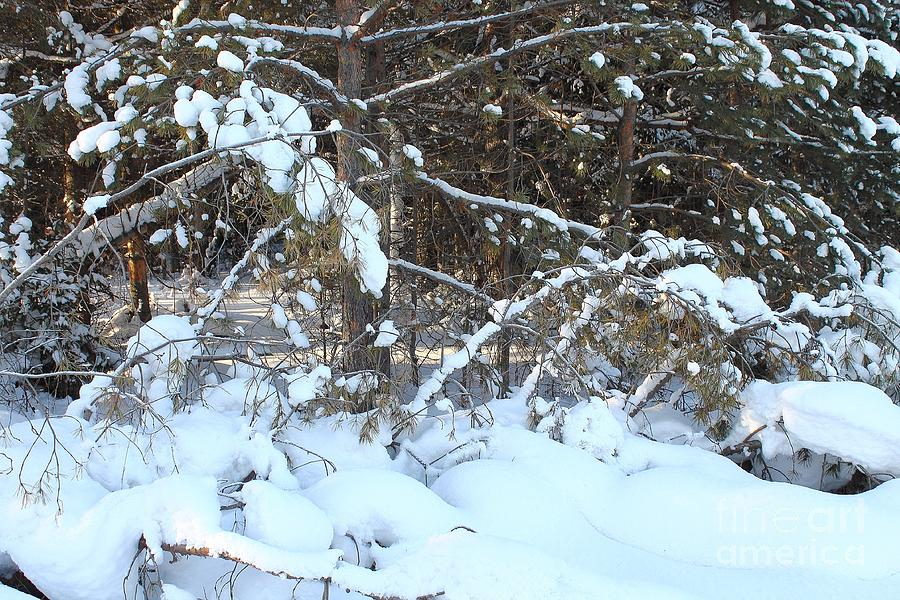 The Snowdrifts Of Snow In The Winter Forest. Photograph