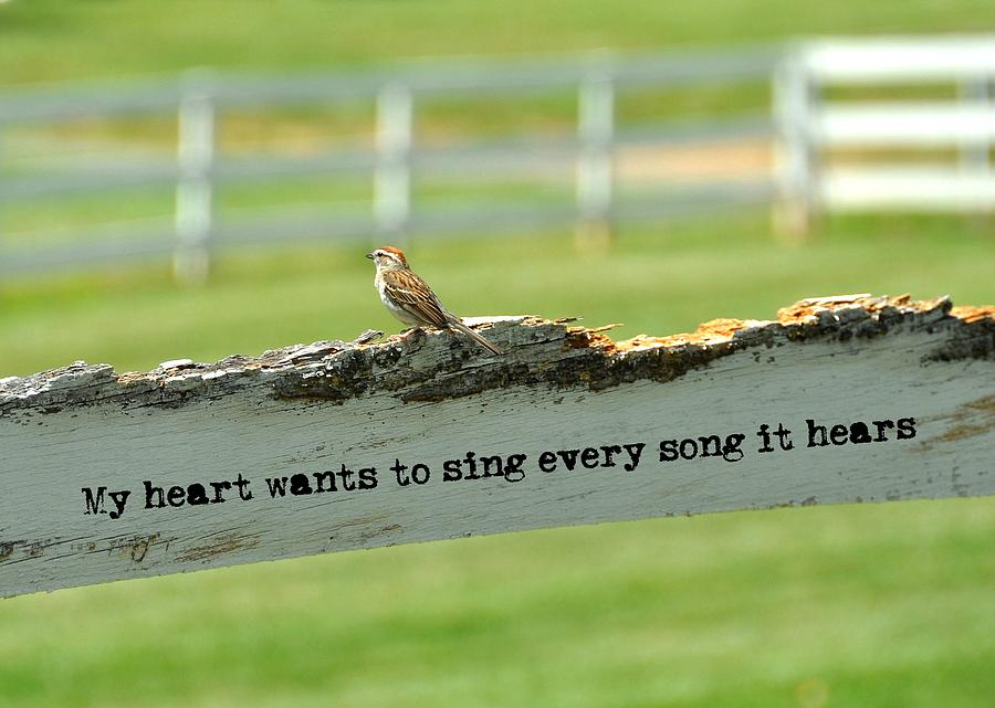 Love Photograph - The Sound Of Music Quote by JAMART Photography