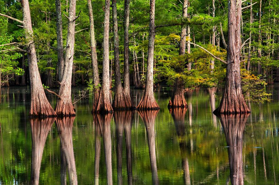 Louisiana Photograph - Southern Swamp The Sound Of Silence by Ester McGuire