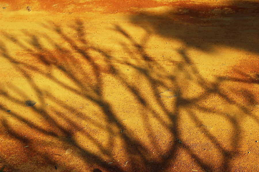 Nature Photograph - The Soundlessness Of Nature by Prakash Ghai