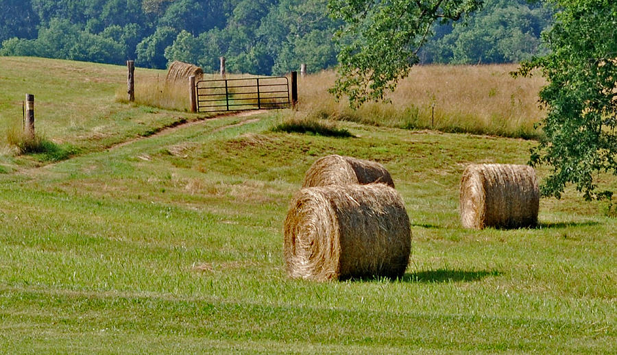 Grass Photograph - The South by Steavon Horne