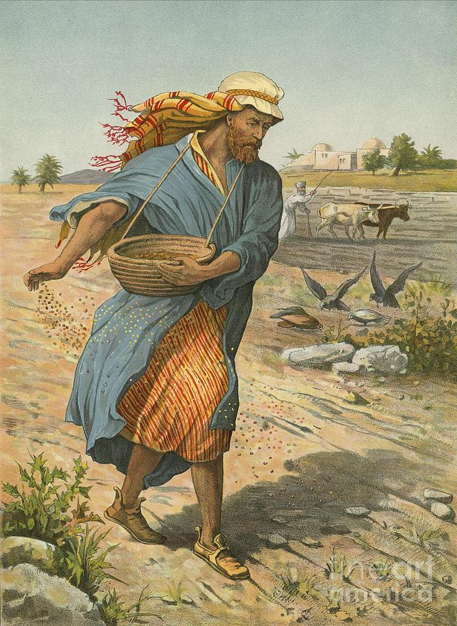 https://images.fineartamerica.com/images/artworkimages/mediumlarge/1/the-sower-sowing-the-seed-english-school.jpg
