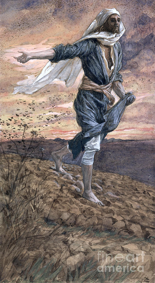 The Painting - The Sower by Tissot
