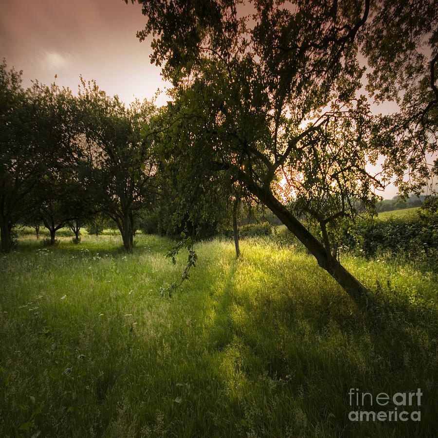 Spring Photograph - The Spring Orchard by Angel Ciesniarska