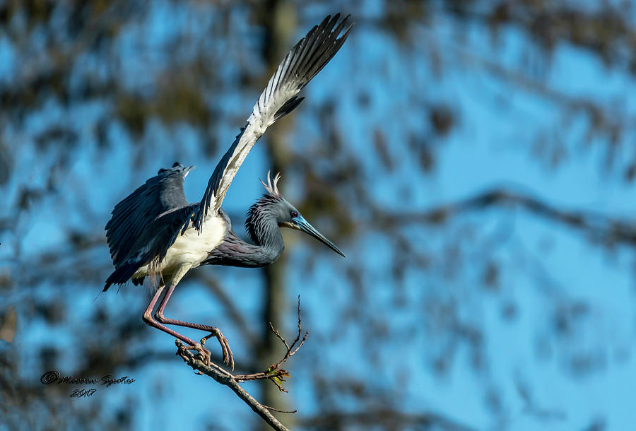 Nesting Photograph - The Stage Entry by Marvin Spates