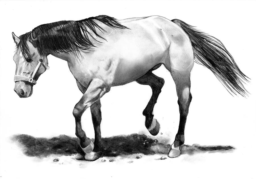 Horse Drawing - The Stallion by Joyce Geleynse