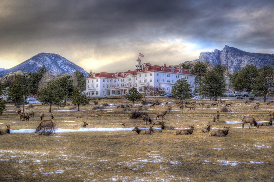 The Stanley Hotel Photograph - The Stanley With Elk by G Wigler