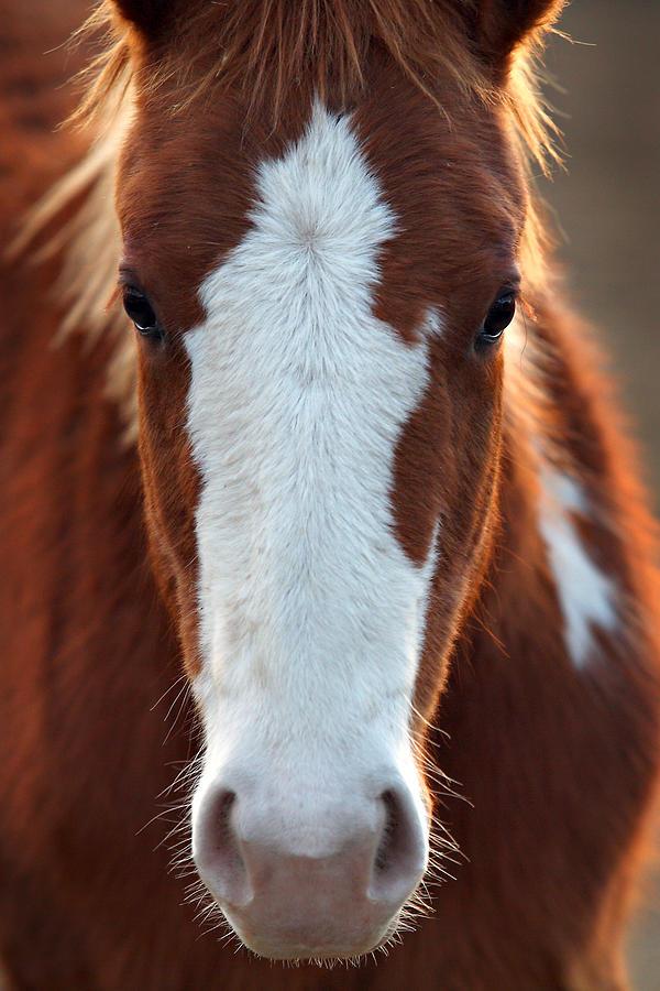 Horse Photograph - The Stare by Deborah Johnson