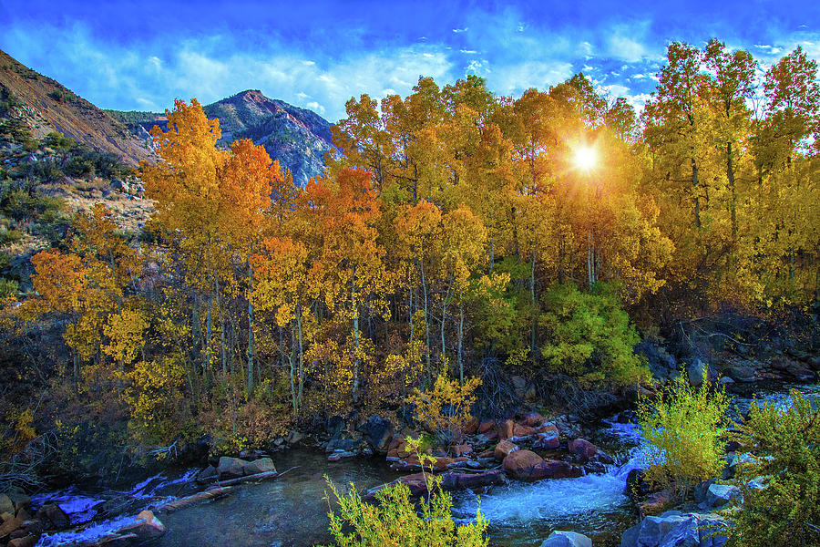 Autumn Photograph - The Stars Of Autumn by Lynn Bauer