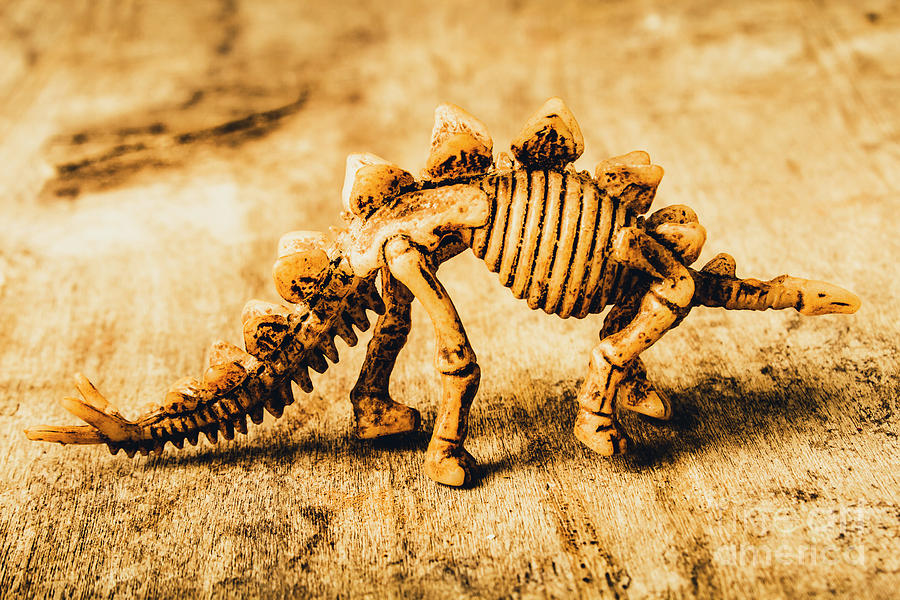 Exhibit Photograph - The Stegosaurus Art In Form by Jorgo Photography - Wall Art Gallery