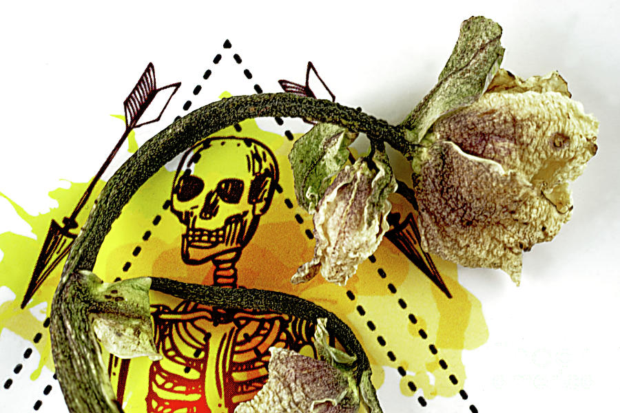 The Still Life With A Winter Rose Flower In A Macabre Style. Photograph