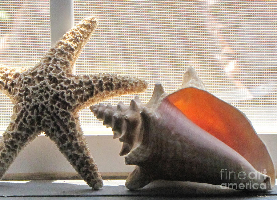 Starfish Photograph - The Story Teller by Pauline Ross