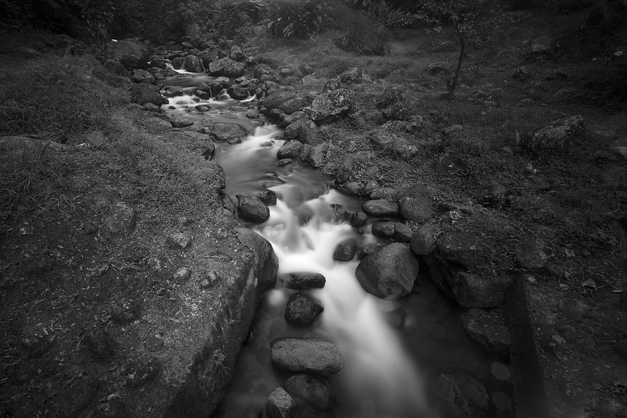 The Stream In Martinique Photograph