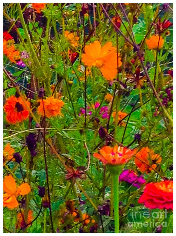 Mixture Photograph - The Summer Flower Party by Debra Lynch
