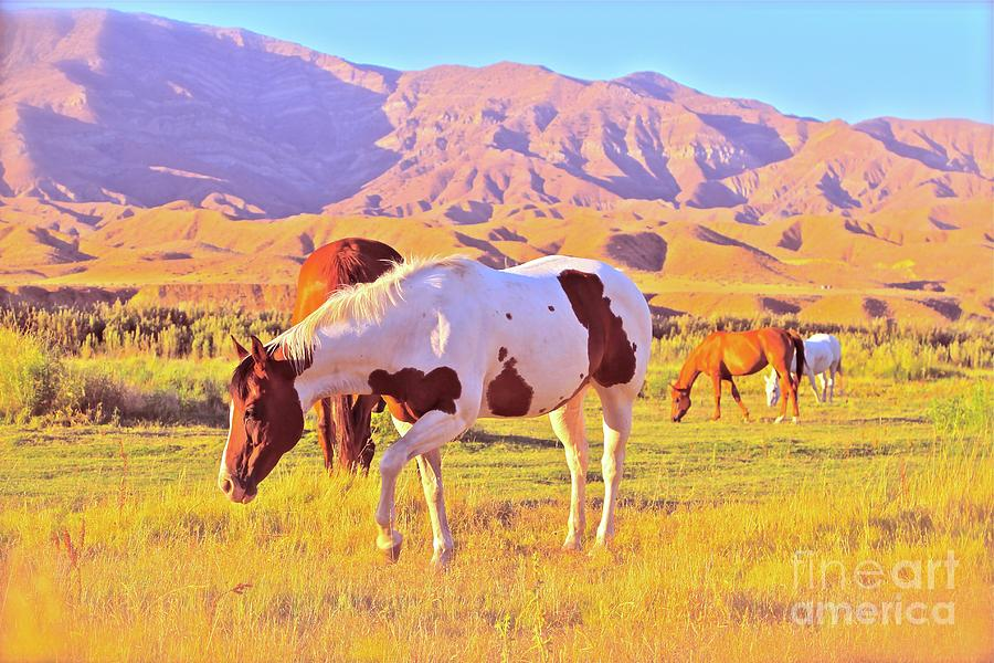 Horse Photograph - the Sundowners by Gus McCrea