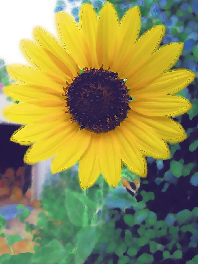 Sun Flower Photograph - The Sunflower by Chuck Shafer