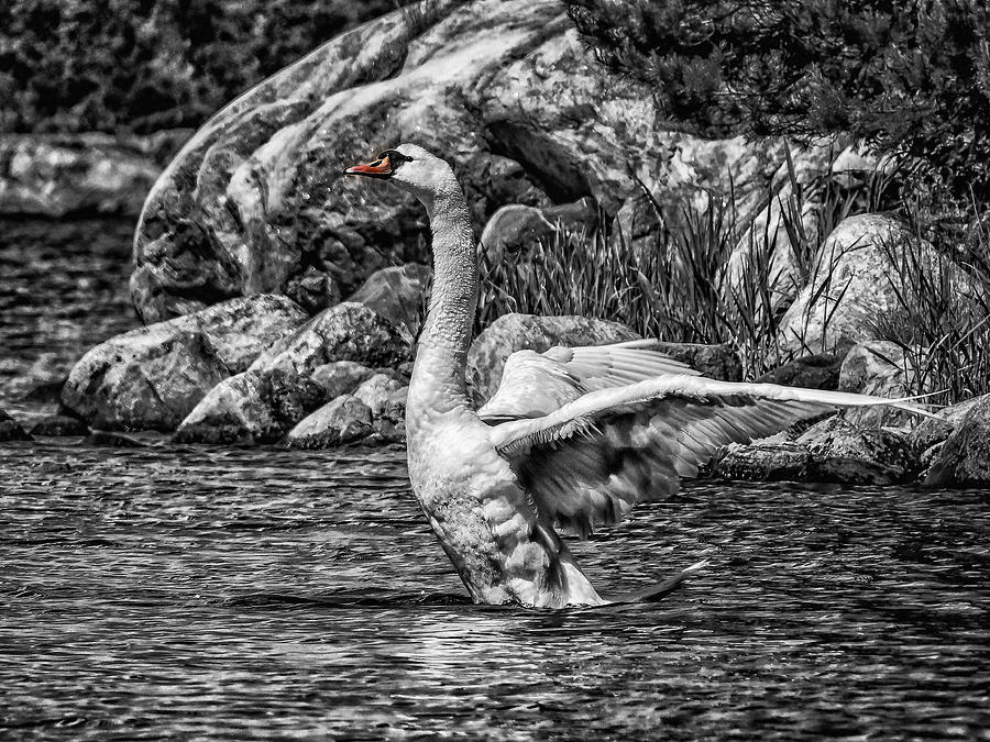 Landscape Photograph - The Swan by Micke Holmberg