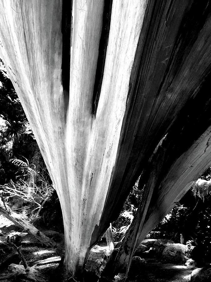 The Swoop of Fallen Wood by Lorraine Devon Wilke