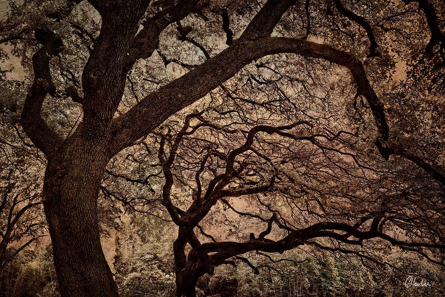 Oak Photograph - The Tango II by Christine Hauber