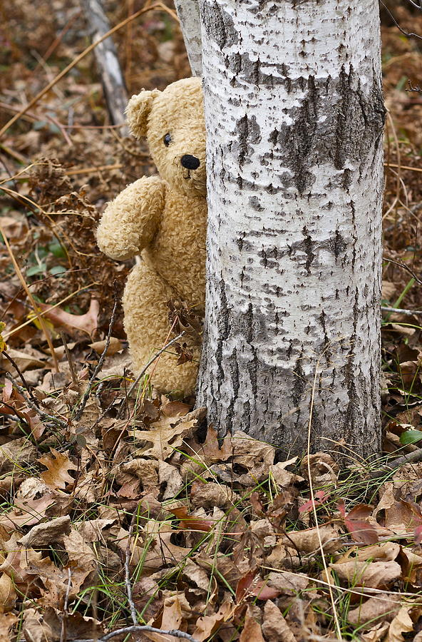Teddy Bear Photograph - The Teddy Bear In The Woods by Danielle Allard