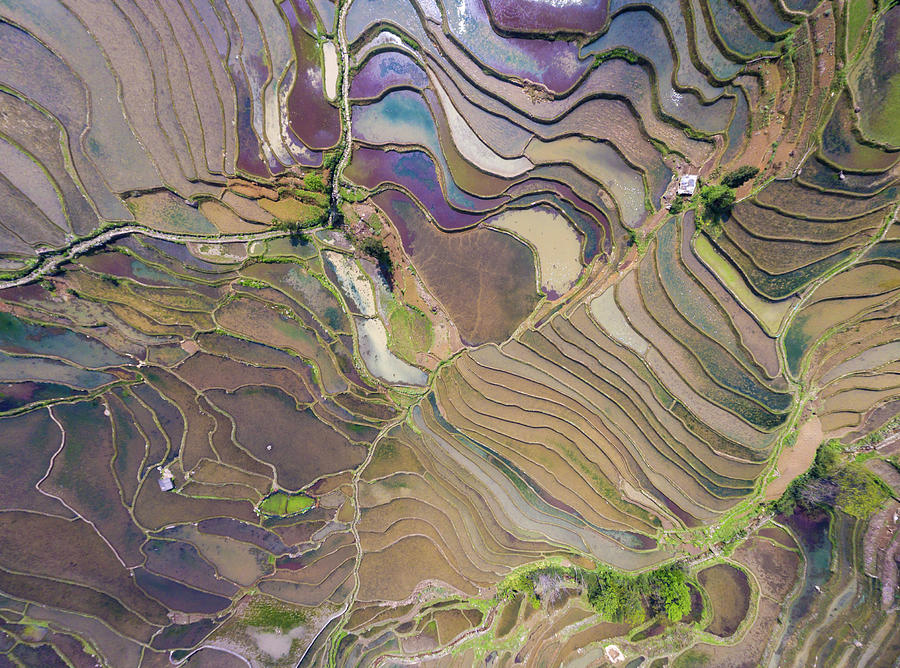 Drone Photograph - The Terraces Of Yuanyang China by Matt Shiffler