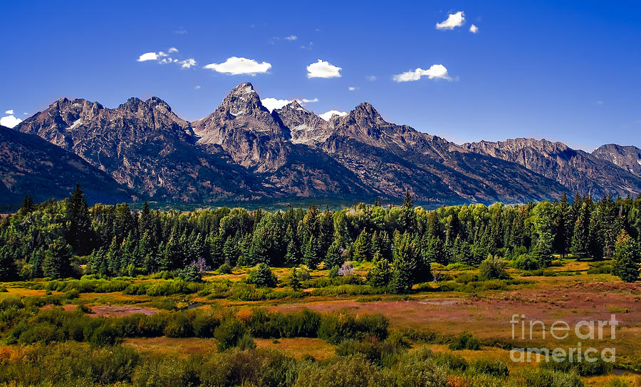 Forest Photograph - The Tetons II by Robert Bales