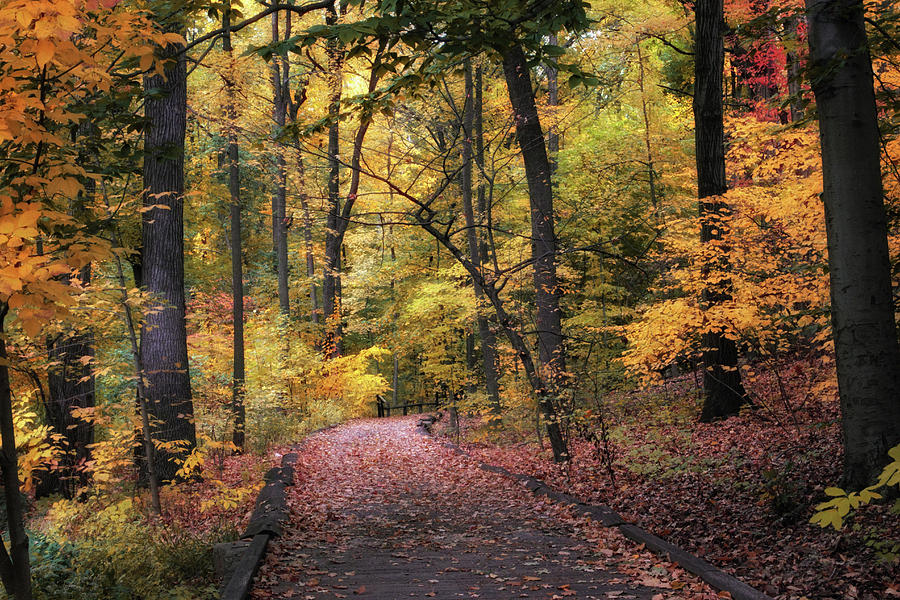 New York Photograph - The Thain Forest by Jessica Jenney