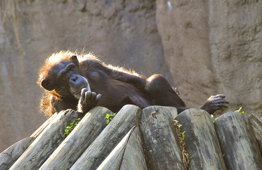 Africa Photograph - The Thinker by David Lee Thompson