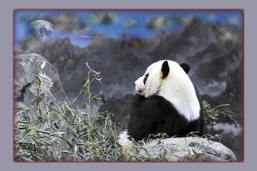 Giant Panda Photograph - The Thinker Tai Shan In Repose Giant Panda  by Jonathan Whichard