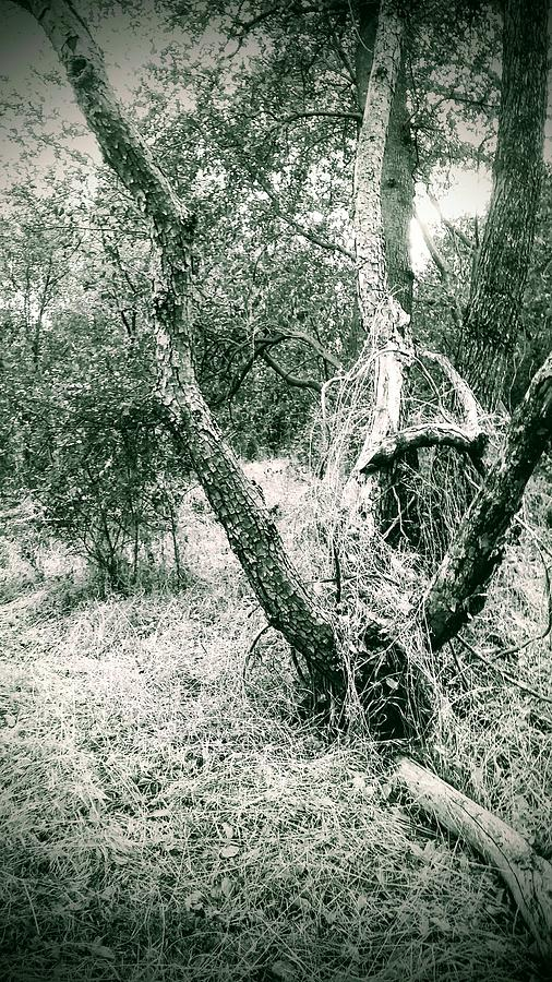 Black And White Trees Photograph - The Thinking Tree by Jennifer Bickford
