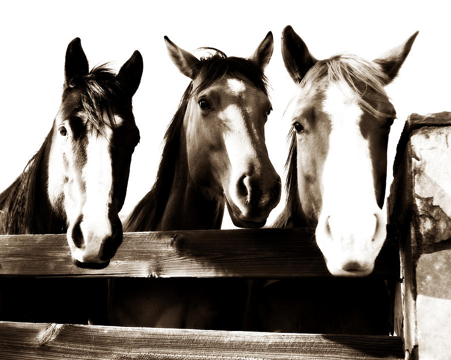Horse Photograph - The Three Amigos In Sepia by Michelle Shockley