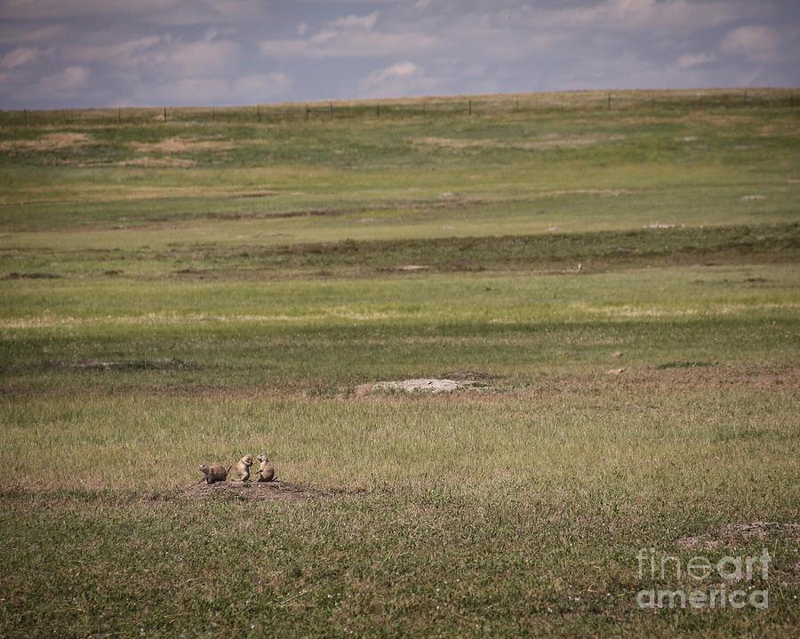 Prairie Dogs Photograph - The Three Amigos by Sandy Adams