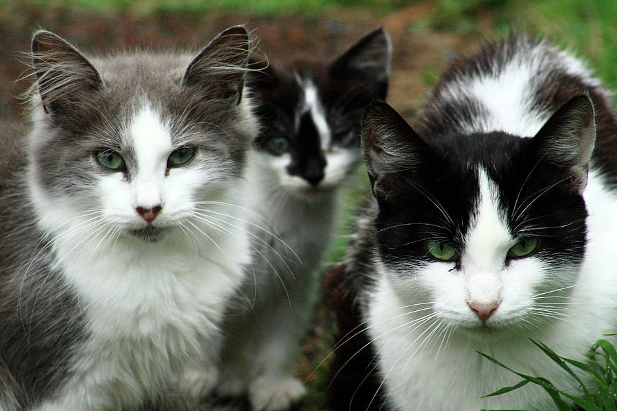 Cats Photograph - The Three Of Us by Elayne Hand