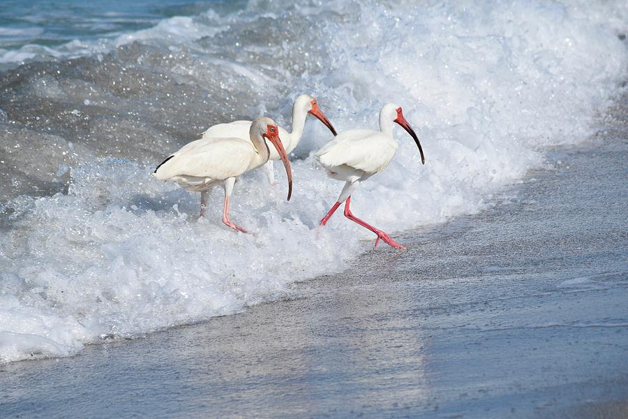 The Tide of the Ibises by Jenny Regan