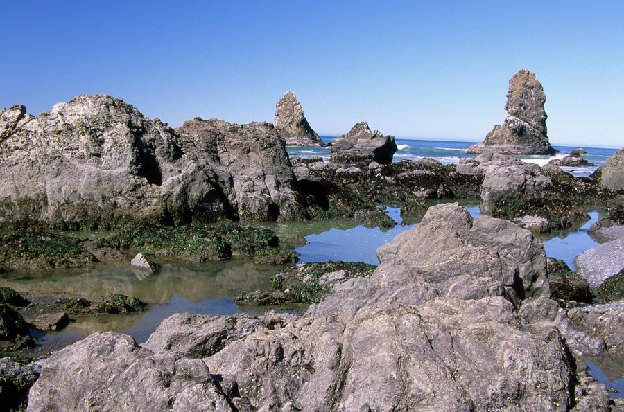 Tidepools Photograph - The Tidepools Of Bear Harbor by Soli Deo Gloria Wilderness And Wildlife Photography