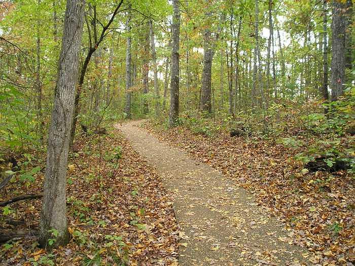 The Trail    Cumberland State Park Photograph by Amanda Hendricks