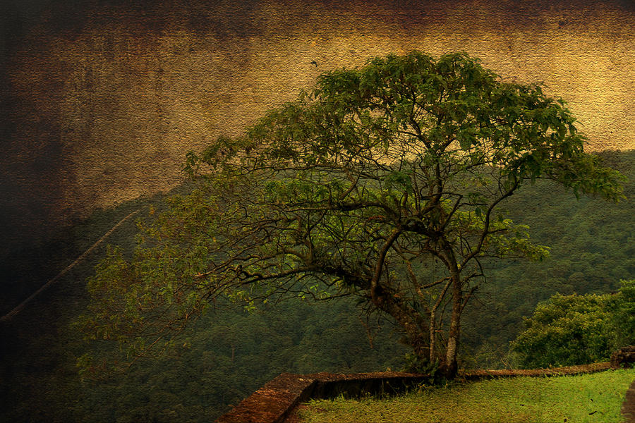 Illustration Photograph - The Tree And The Range by Valmir Ribeiro
