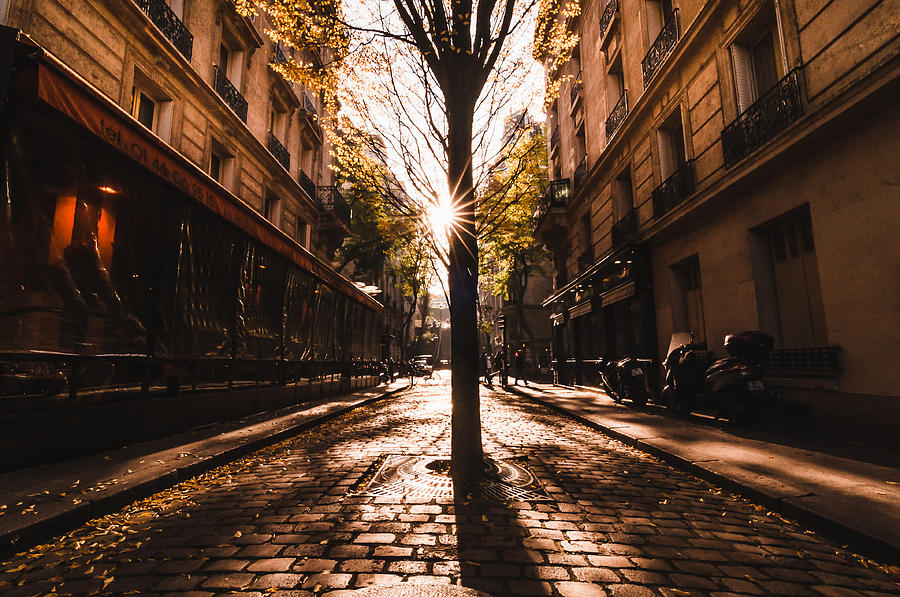 The Tree In Montmartre Photograph