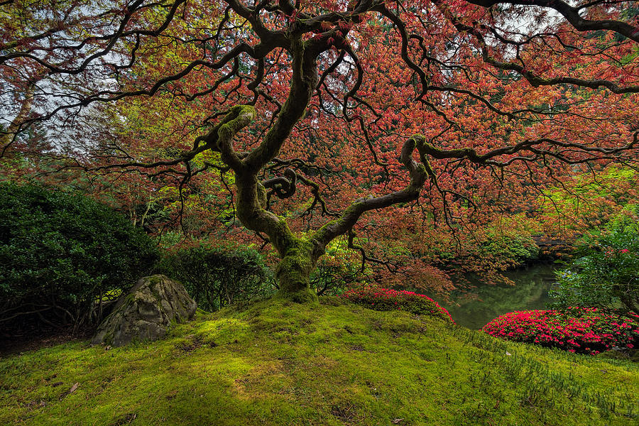 Portland Photograph - The Tree in Spring by David Gn