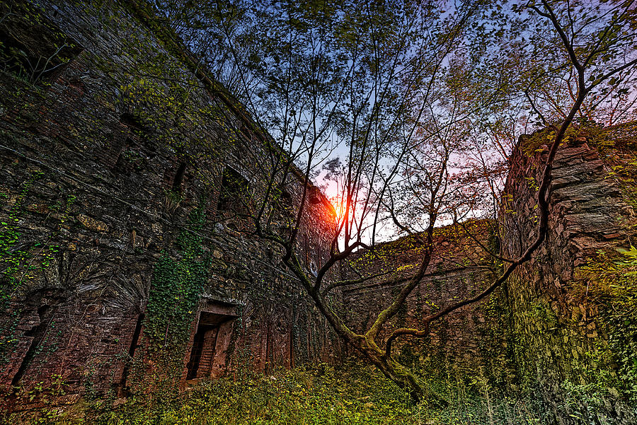 Abandoned Places Photograph - The Tree In The Fort - Lalbero Tra Le Mura Del Forte by Enrico Pelos