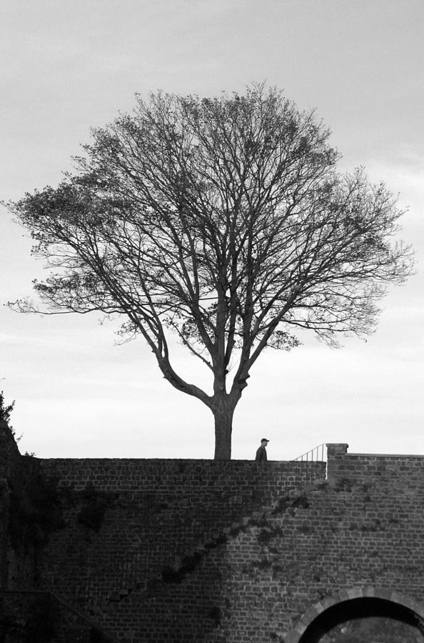 Photographer Photograph - The Tree by Jez C Self