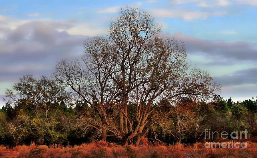Tree Photograph - The Tree by Kimberly Saulsberry